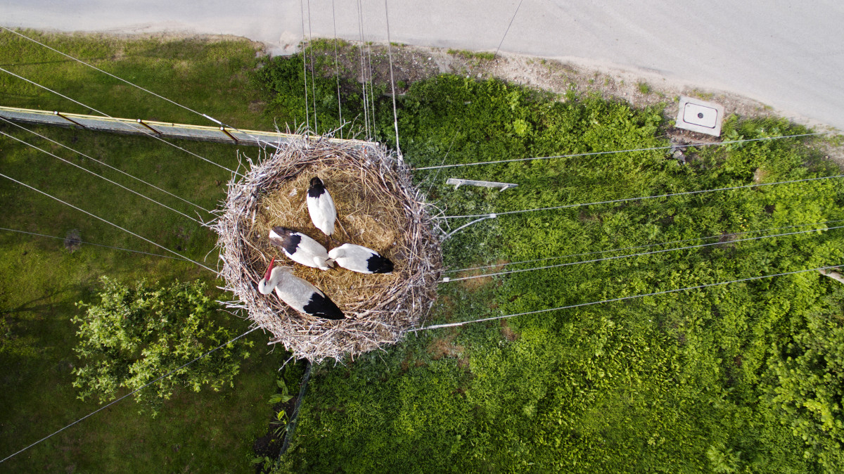 Family Of Storks In The Nest On An Electric Pole