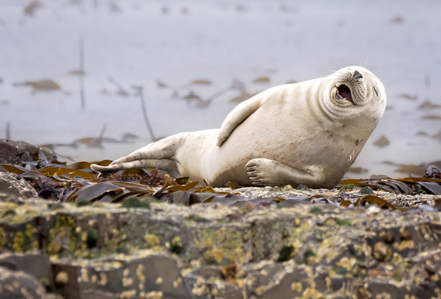 Comedy Wildlife Photo