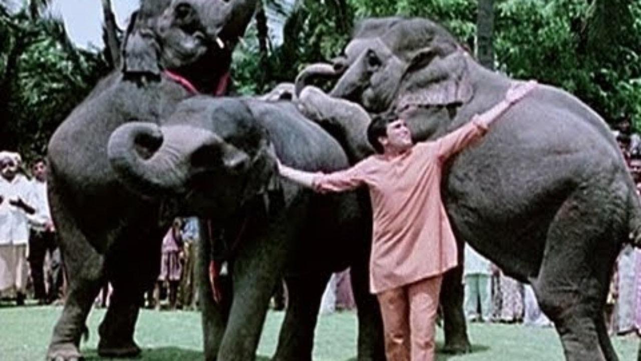 Bollywood Movies-Haathi Mere Saathi