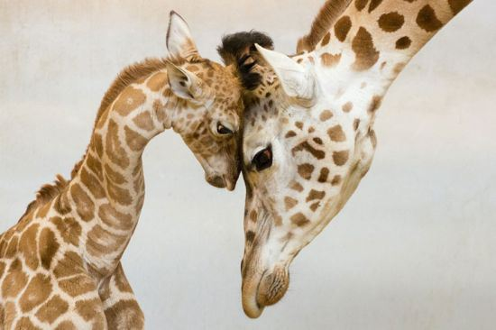 Of The Cutest Animals Love Moments - 22 adorable parenting moments in the animal kingdom