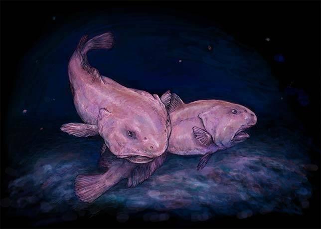 blobfish_aquatic-animals
