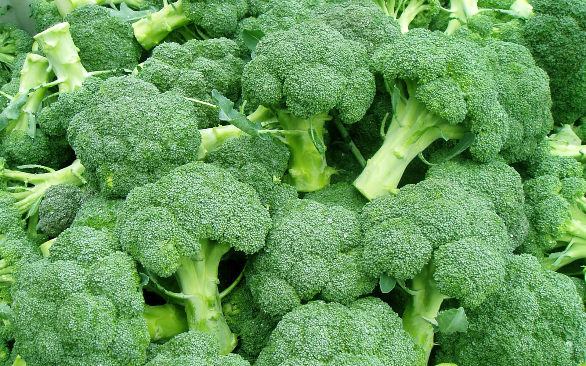 Broccoli_Foods