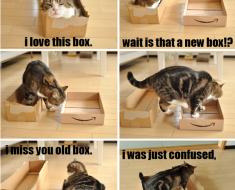 cat-logic_hilarious-image