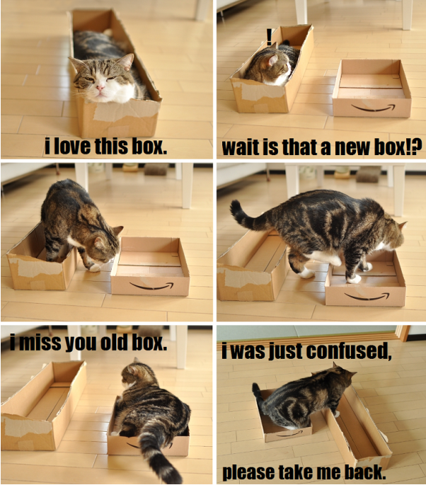 20+ Hilariously Amazing Ways Felines Explain Cat Logic. Humans Still Fail To Understand!