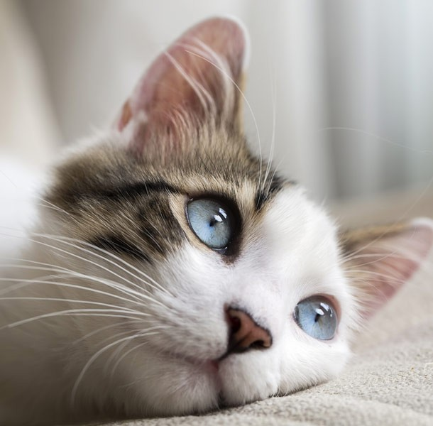 cat_animals