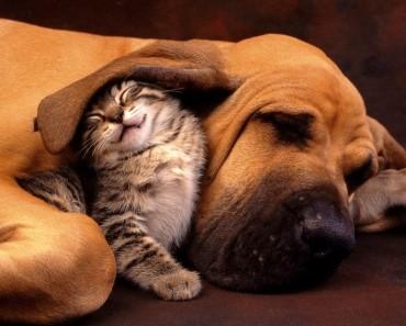 cats-bullying-dogs_v1