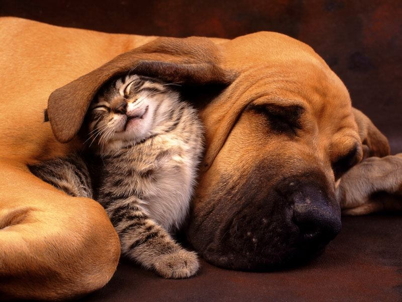 OMG! 27 Cats That Just Can't Get Along With Dogs