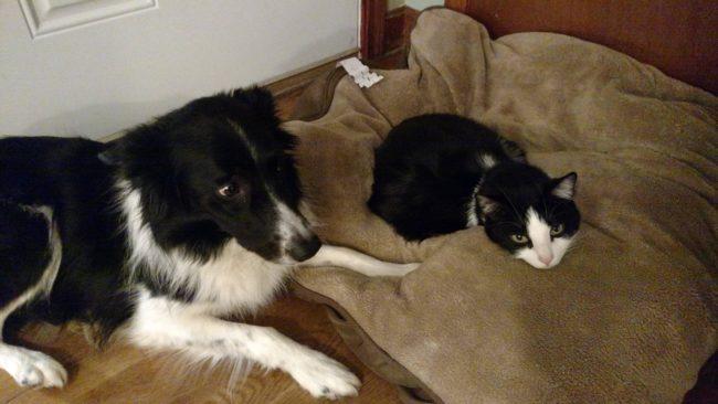 cats-bullying-dogs_v21