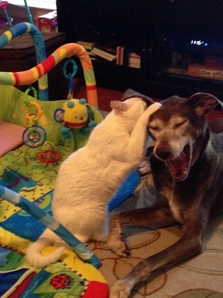 cats-bullying-dogs_v23