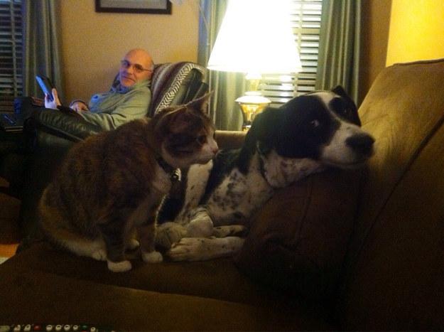 cats-bullying-dogs_v26