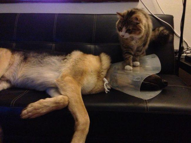 cats-bullying-dogs_v9