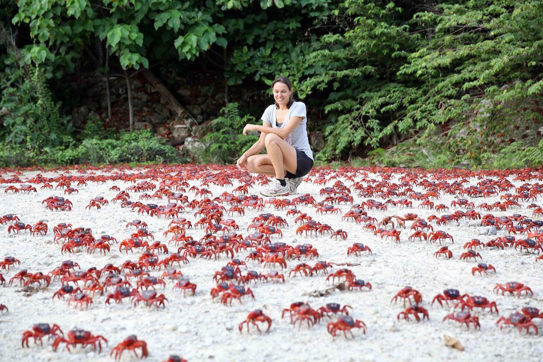 christmas-islands-red-crabs_natural-phenomena