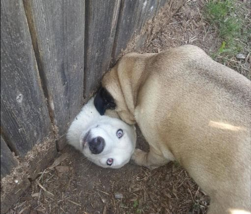 Dog Pictures_v8