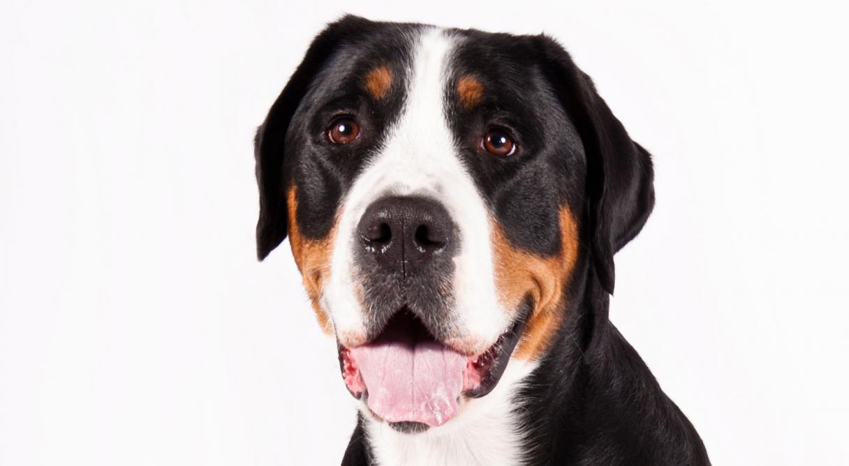 dog_animals