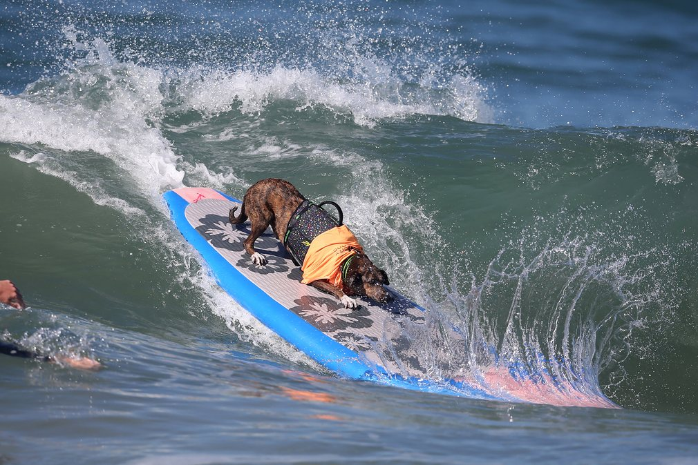 dogs-surfing_v13