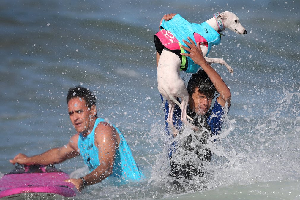 dogs-surfing_v4