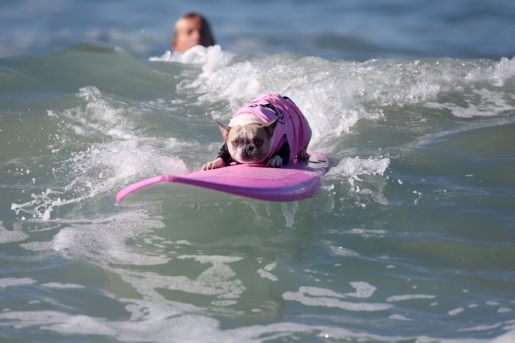 dogs-surfing_v5