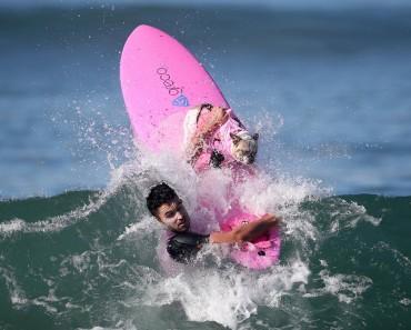 dogs-surfing_v6