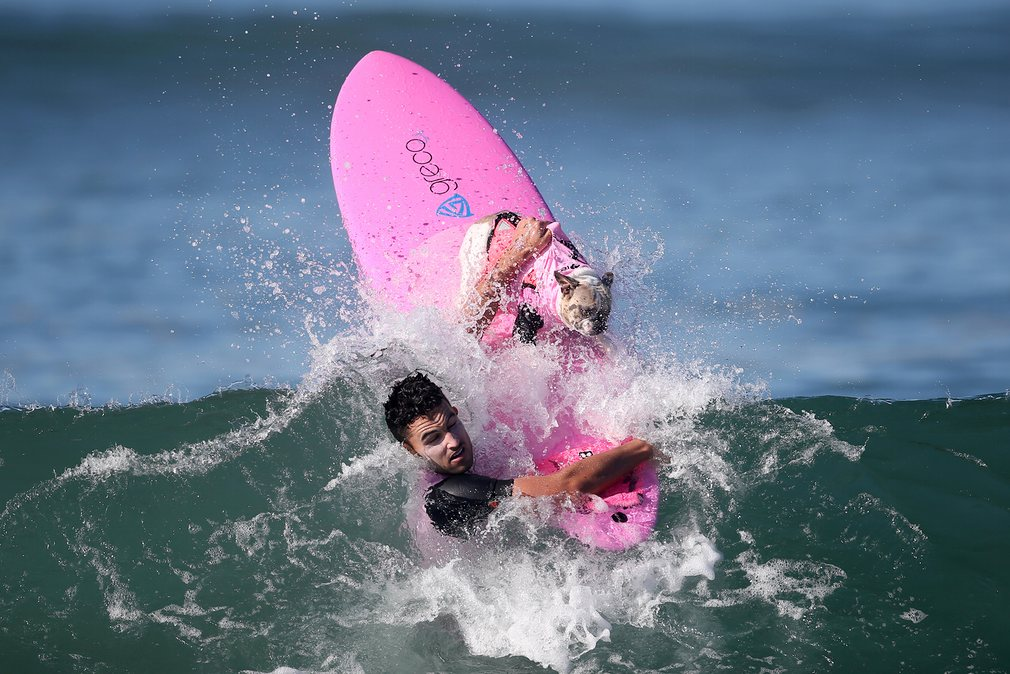 dogs-surfing_v6