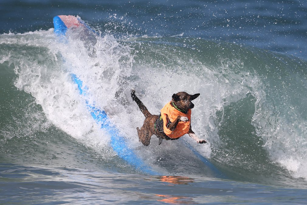 dogs-surfing_v9