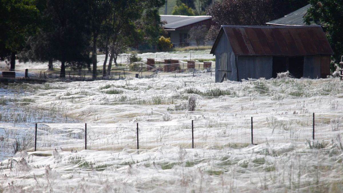 fields-of-web_-natural-phenomena