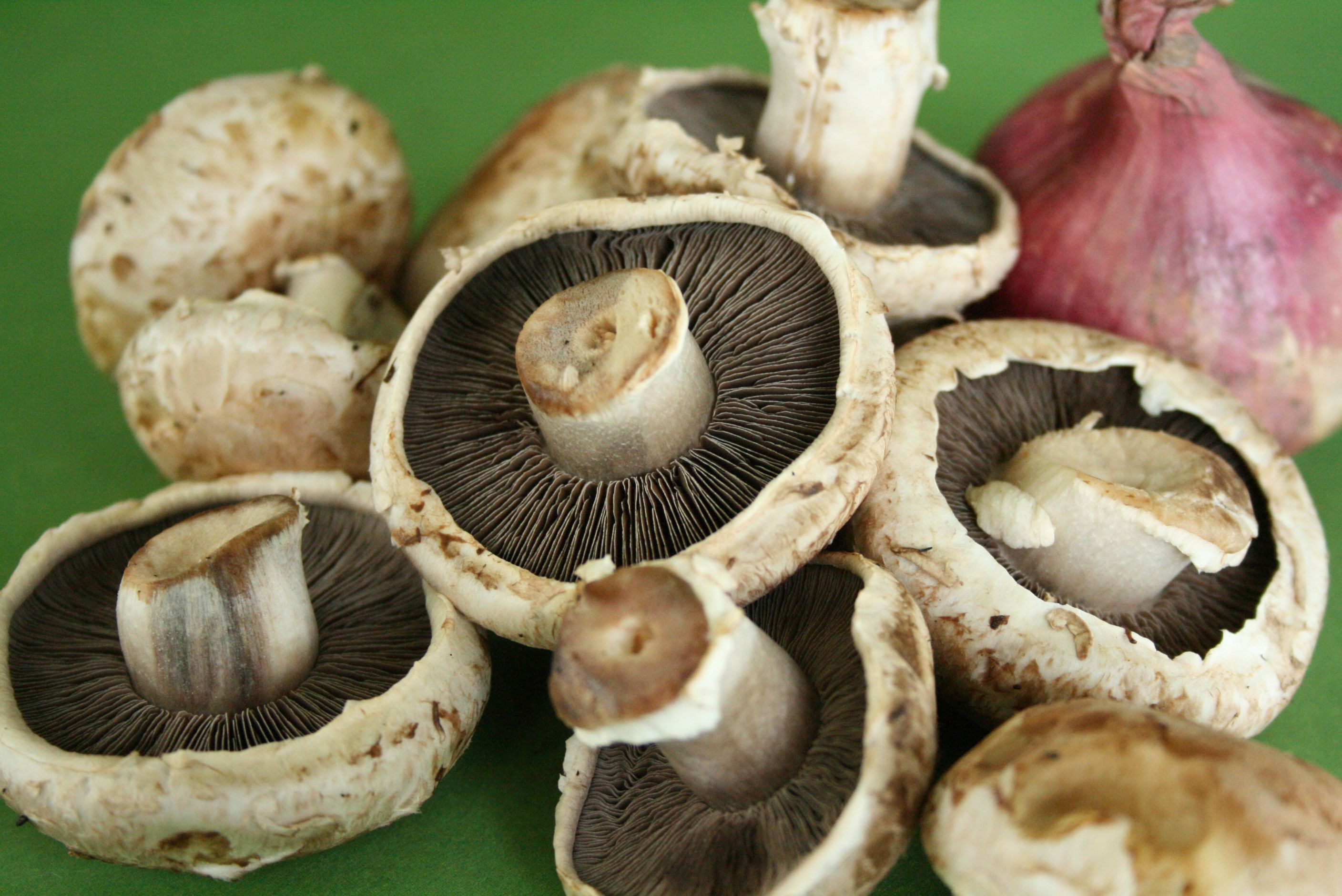 Portabello Mushrooms_Foods