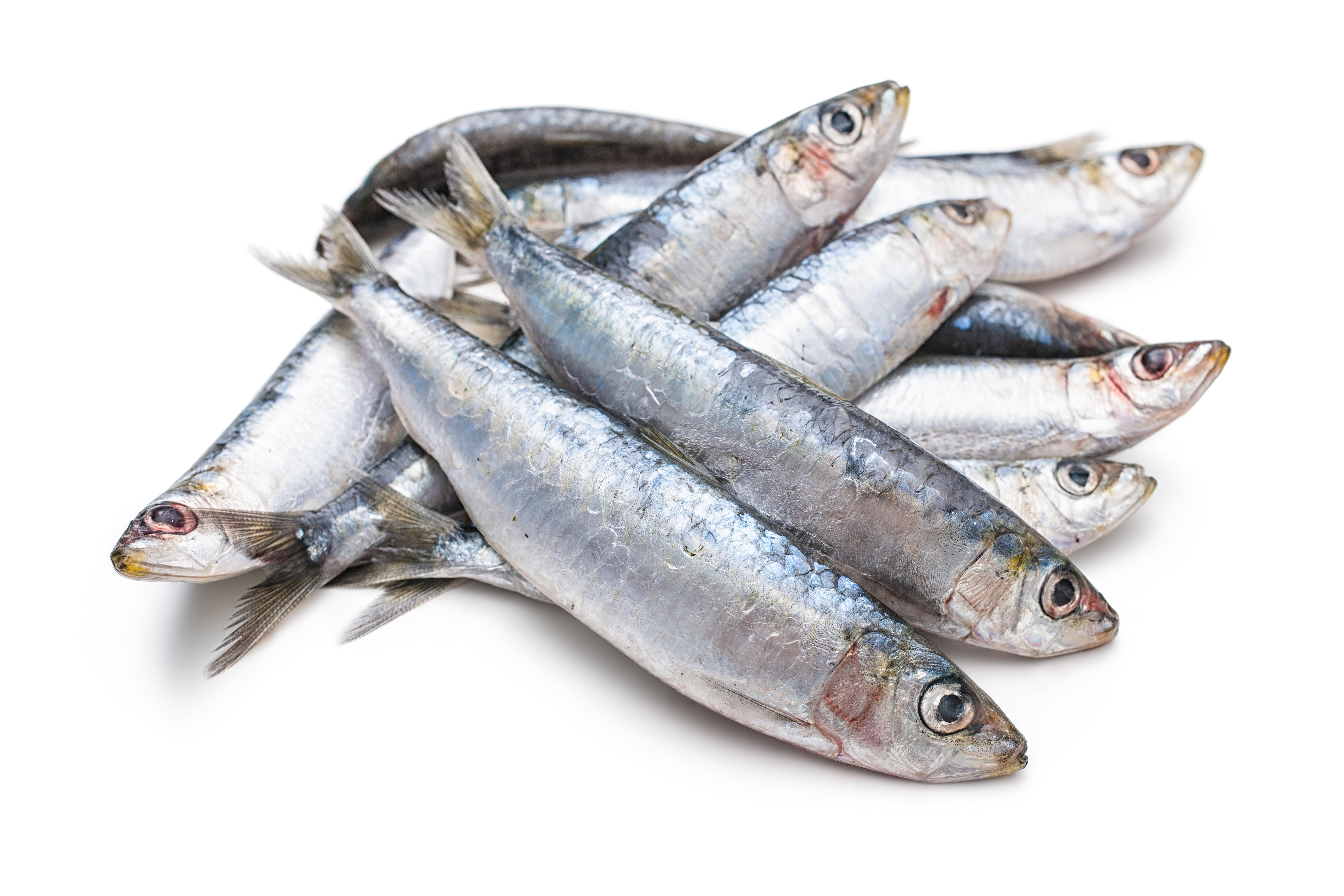 Sardines_Foods