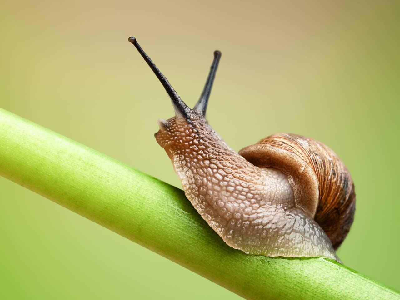 snail_animals