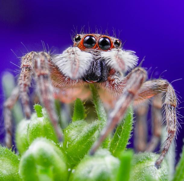spider_animals