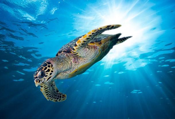 turtle_animals