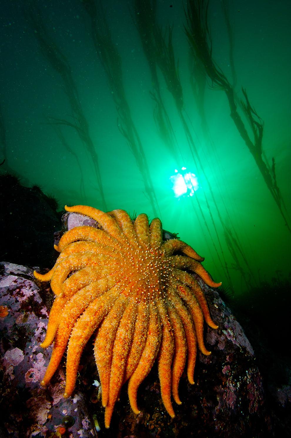underwater-photos_v10