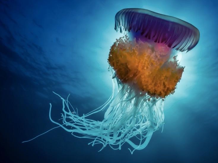 underwater-photos_v19