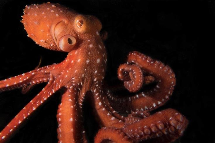underwater-photos_v20