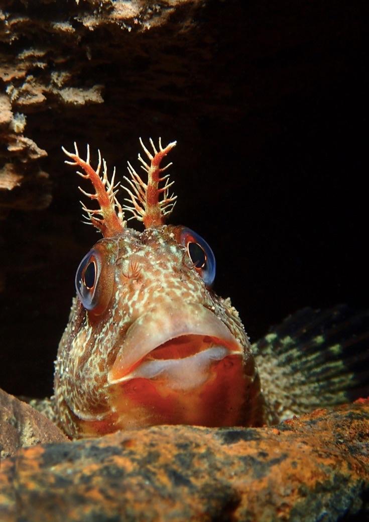 underwater-photos_v22