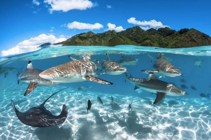 underwater-photos_v27