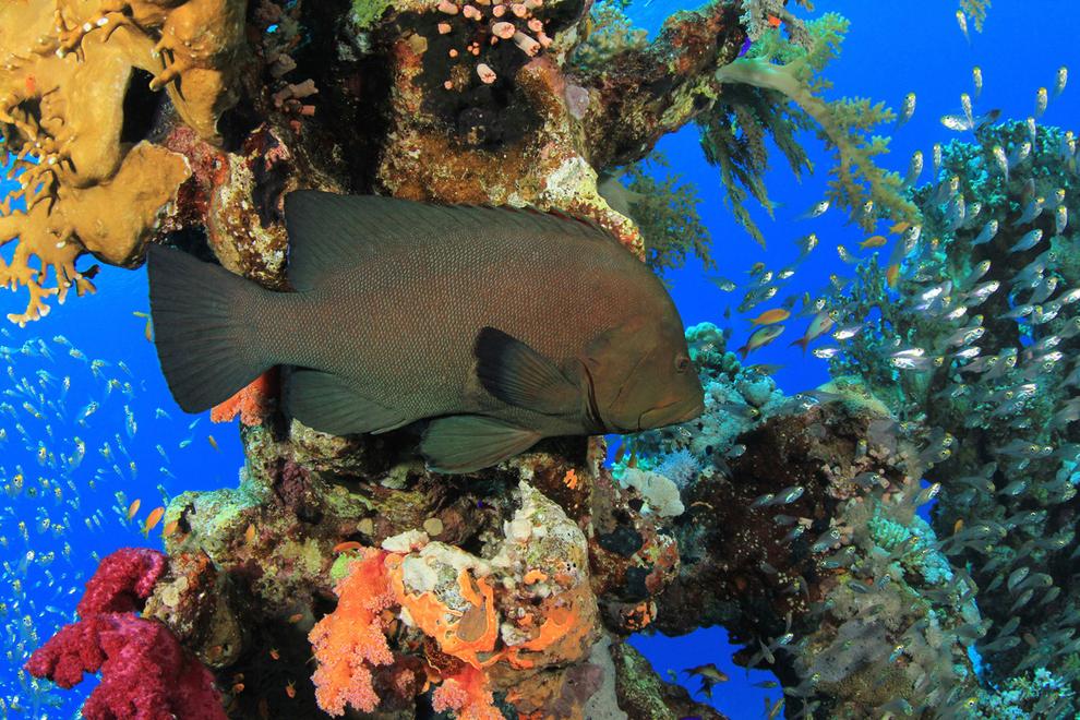 underwater-photos_v3