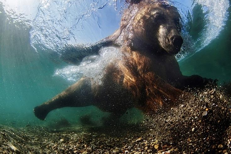 underwater-photos_v30
