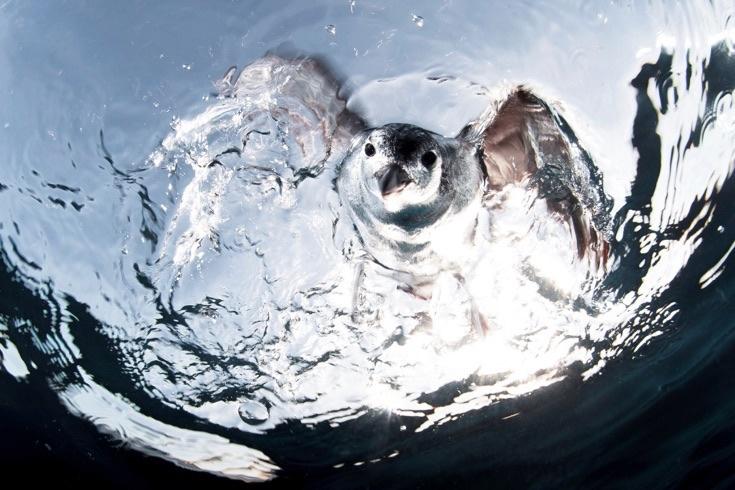 underwater-photos_v31