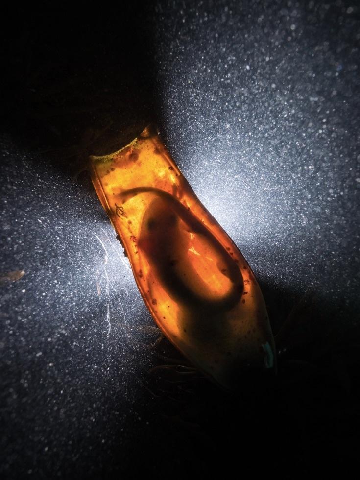 underwater-photos_v32