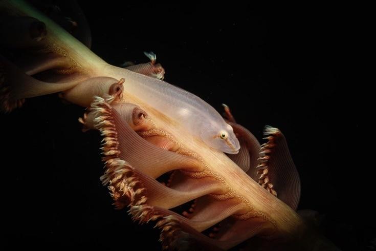 underwater-photos_v33