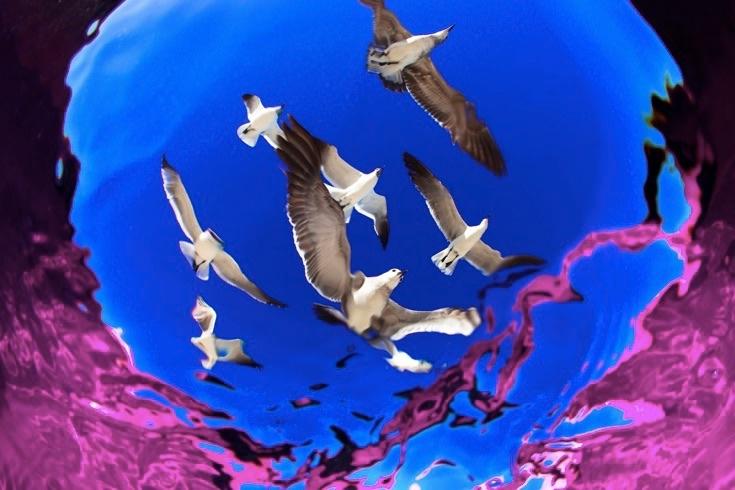 underwater-photos_v35