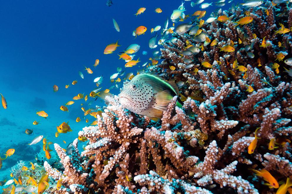 underwater-photos_v5