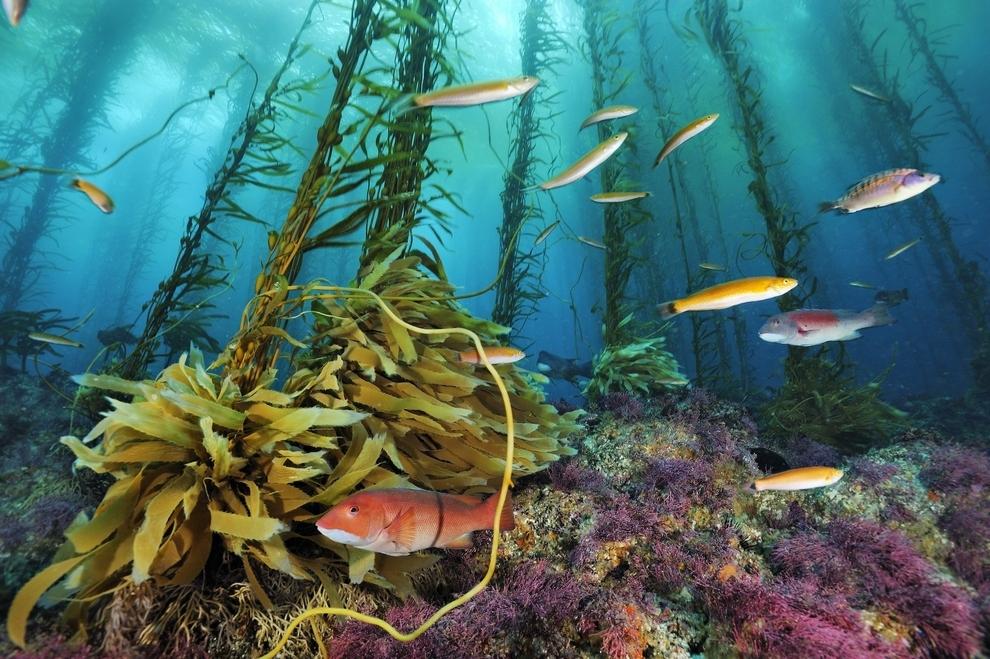 underwater-photos_v8