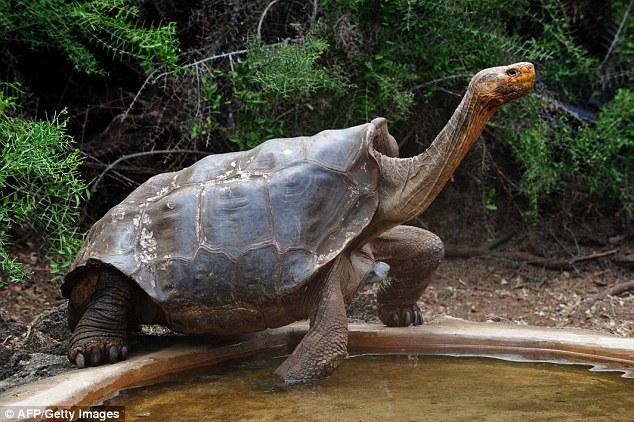tortoise-sex-v2