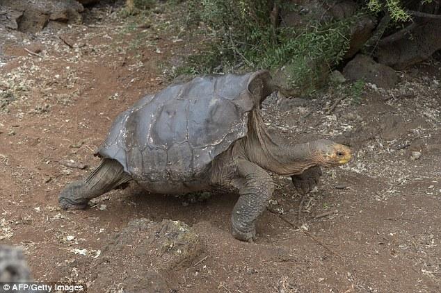 tortoise-sex_v4