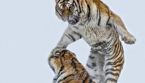 animals-photos_v27