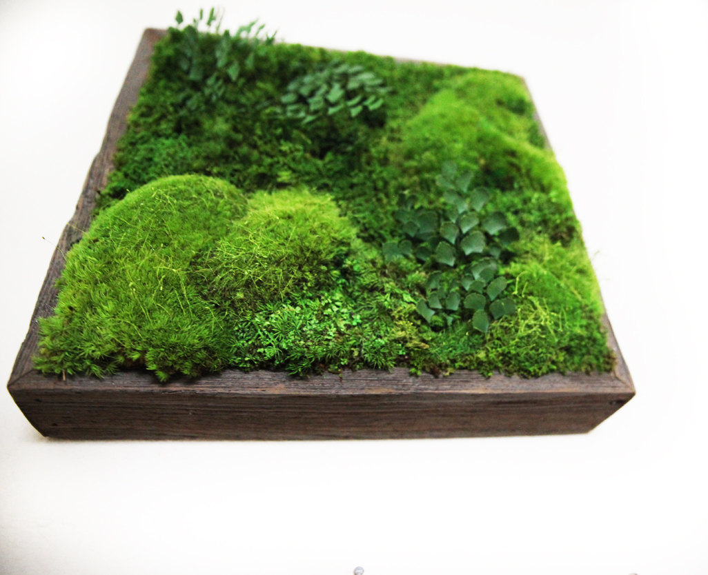 artisan-moss-plant-art_home-decor-gifts
