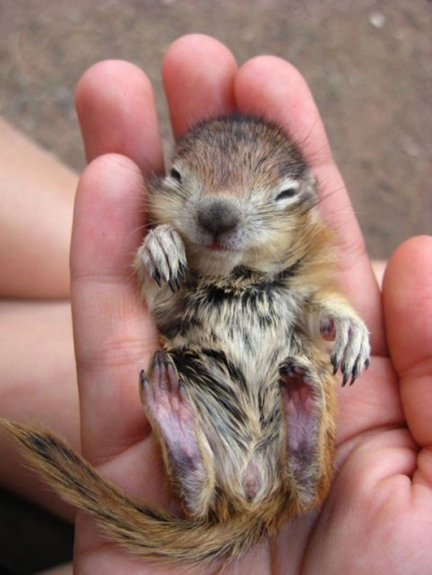 baby-chipmunk_cute-animals