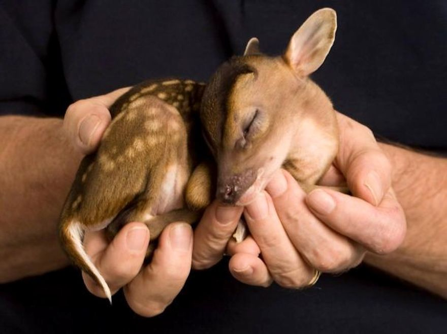 baby-deer_cute-animals