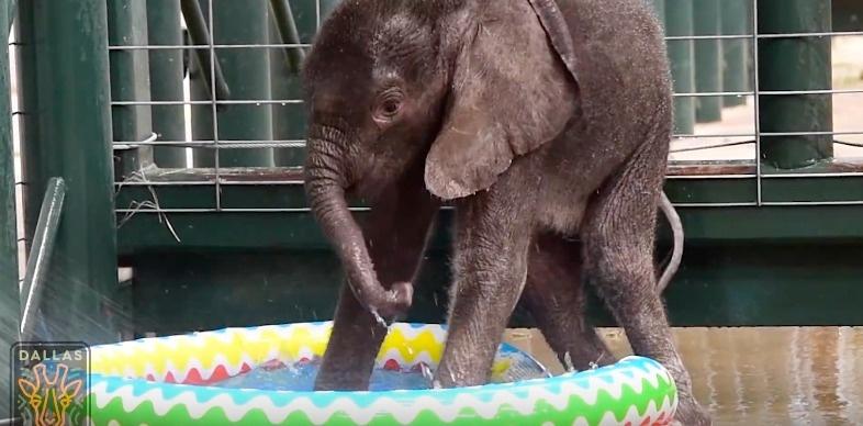 baby-elephant-v1